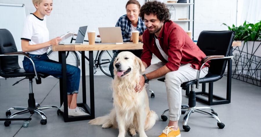 vida social perro adoptado