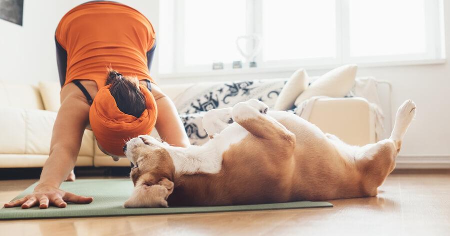 yoga con perro adoptado