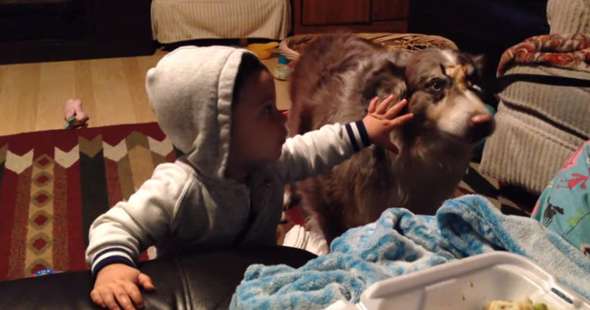 bebe intenta callar al perro