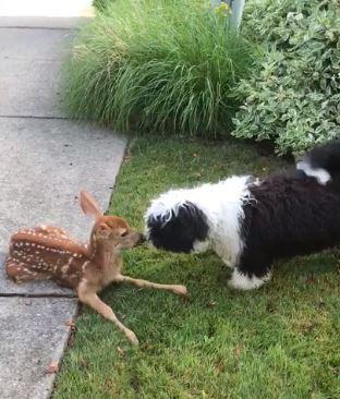 perro y ciervo beso