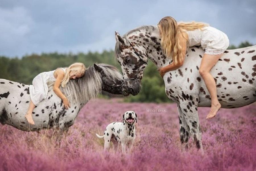 dalmata caballos posan padros con mujer y nina