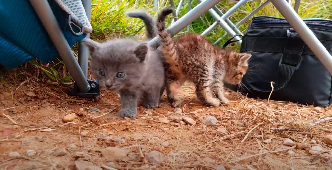 dos gatitos perdidos