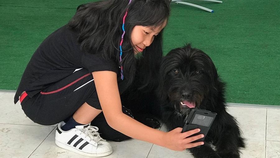 michi perra callejera camino santiago posa junto a su humana