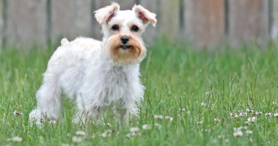 perro gibbs