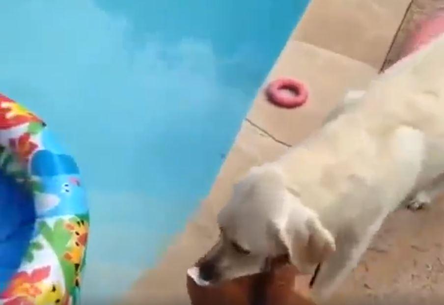 perro con peluche piscina