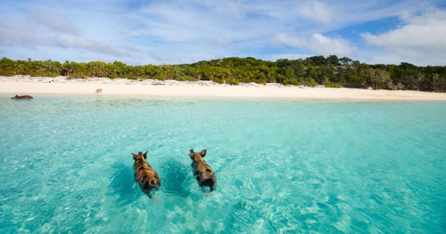 playa cerdos bahamas