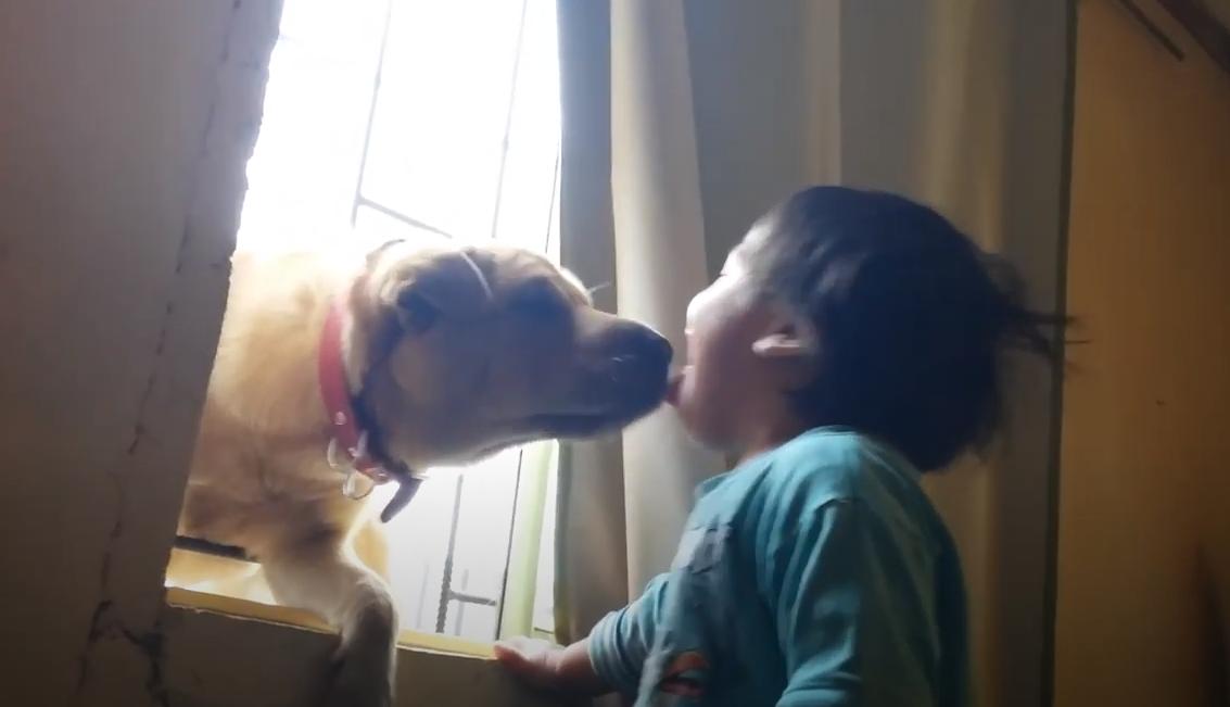 perro y bebe beso en la ventana