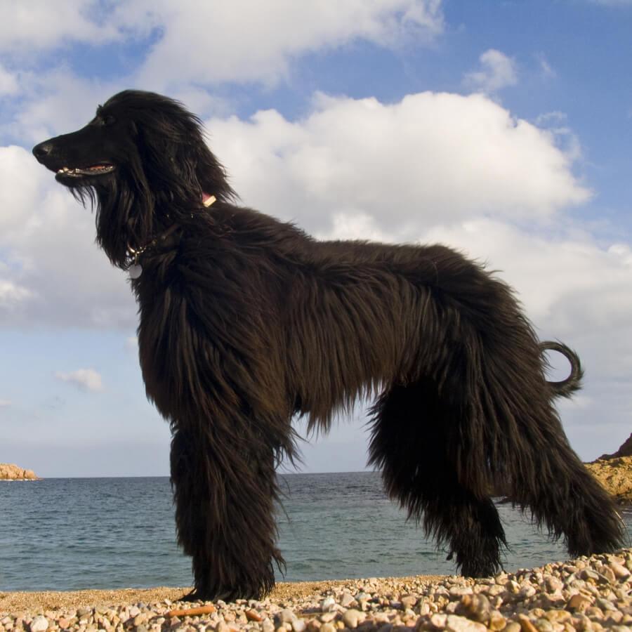perro en playa tossa de mar