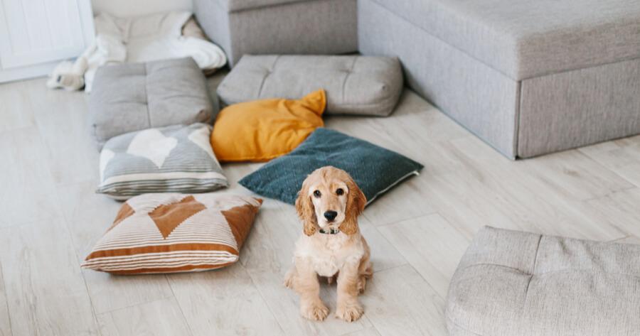 cocker cachorro salon