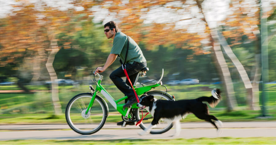 dia mundial bicicleta perro atado bici
