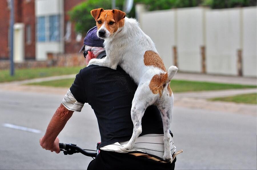 dia mundial bicicleta perro colgado espalda dueno