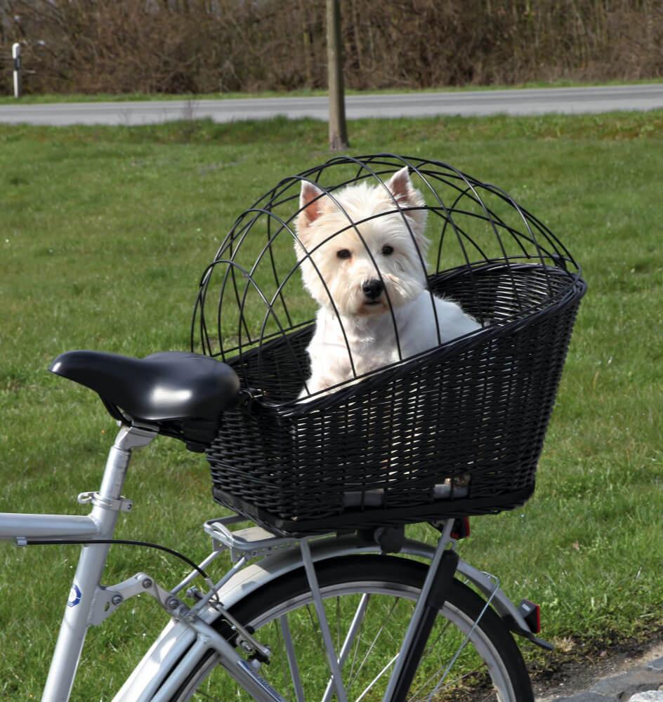 dia mundial bicicleta perro reja cesta