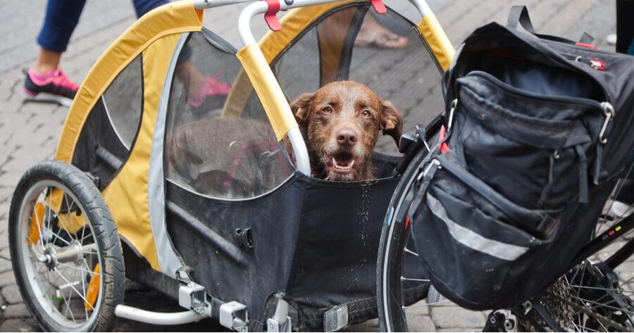 dia mundial bicicleta remolque