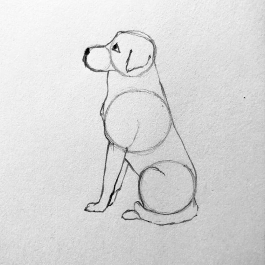 dibujar perro paso 4