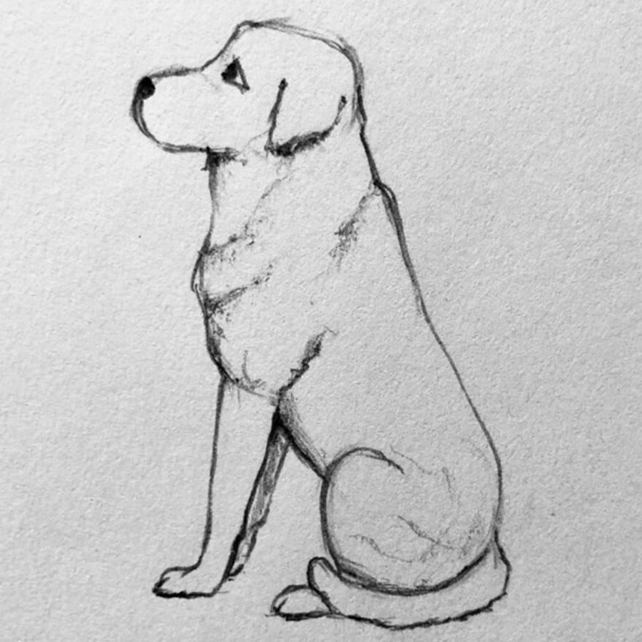 dibujar perro paso 5