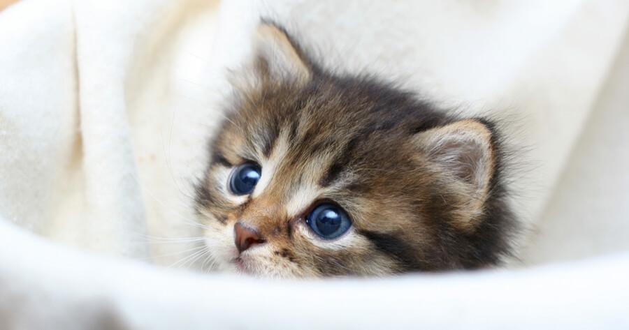 gato bebe camita