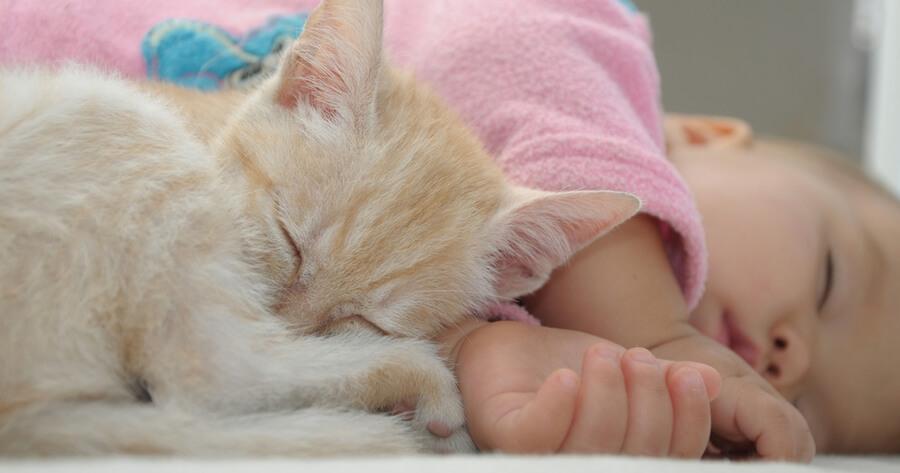 gato con bebe en la cama