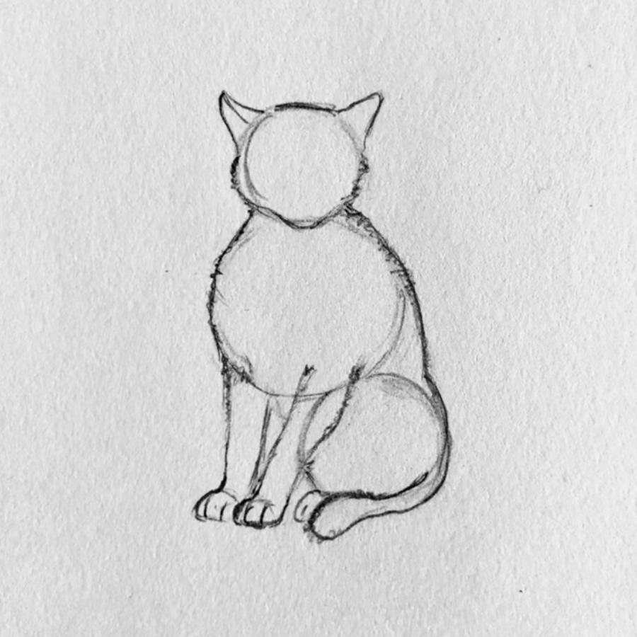 gato dibujo paso 3