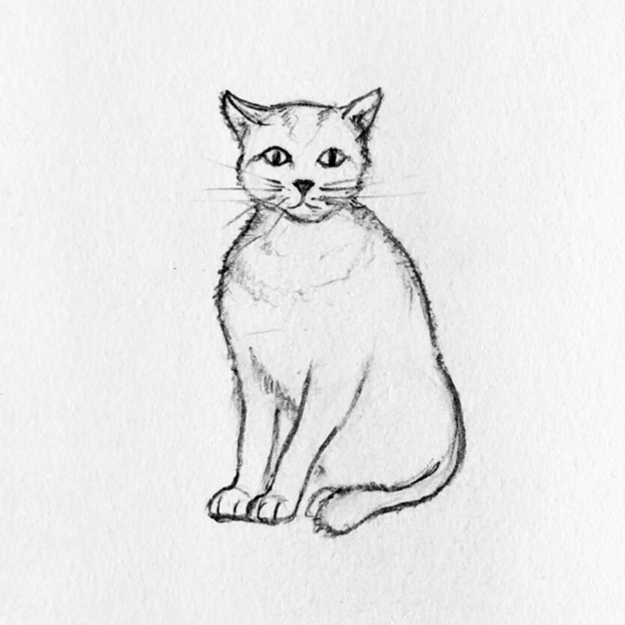 gato dibujo paso 5