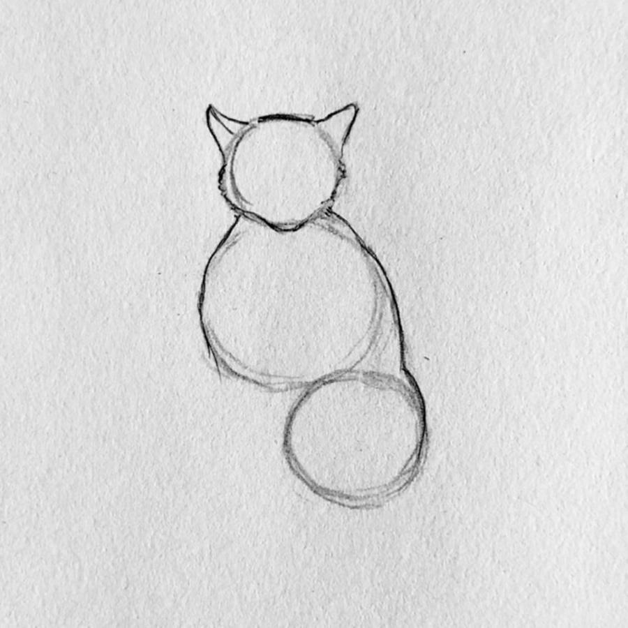 gato dibujo paso 2