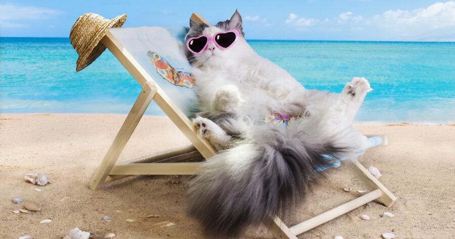 gato tomando el sol playa