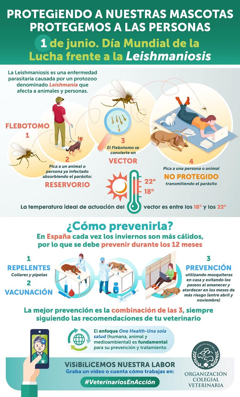 infografia leishmania canina organizacion veterinaria espanola