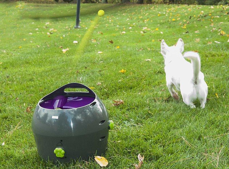 lanza pelotas perros amazon