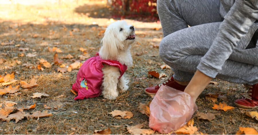 mujer recoge excrementos bolsas biodegradables perros