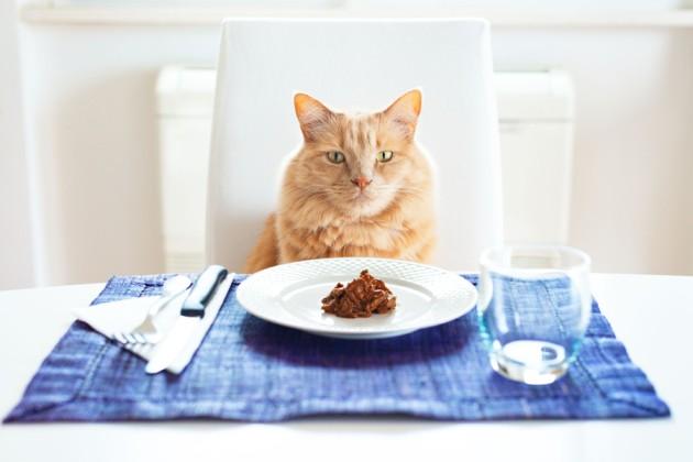 gato gourmet comida