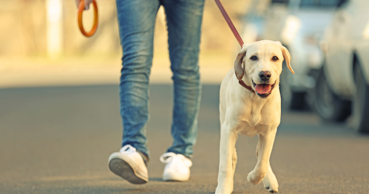 pasear perro cuarentena coronavirus espana