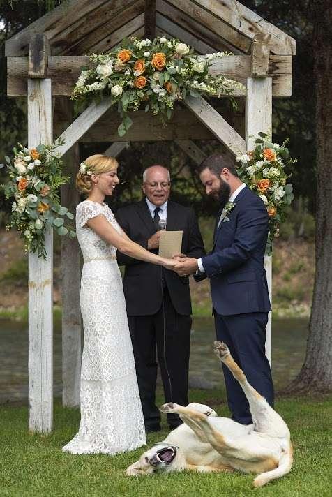 labrador boda
