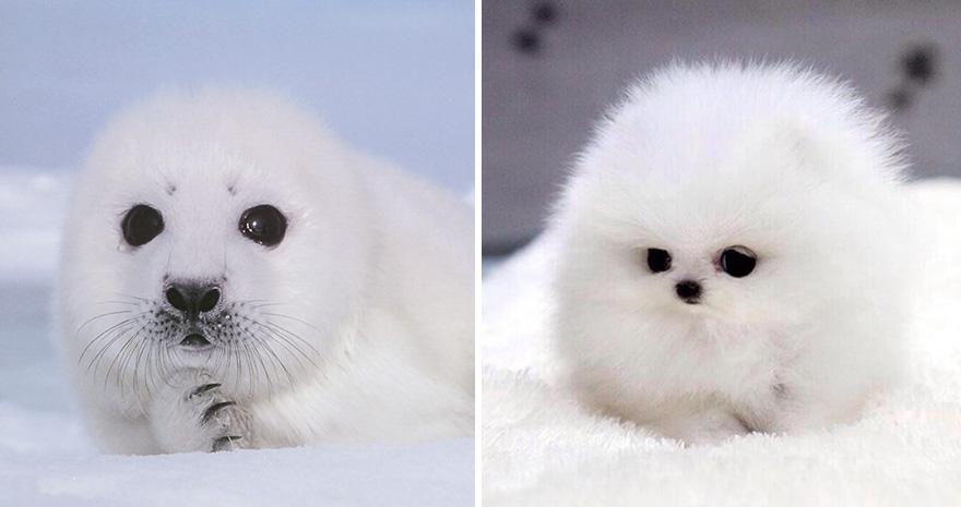 perro igual a foca blanca