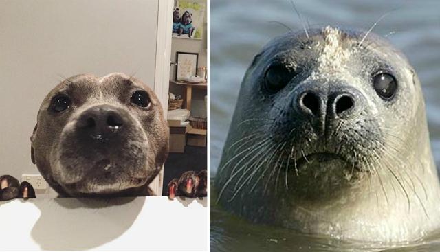 foca parece perro