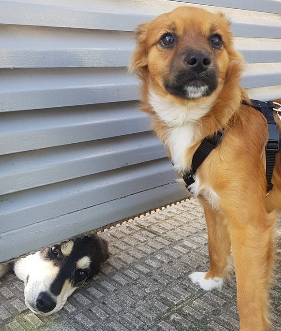 argi perro pamplona amistad puerta