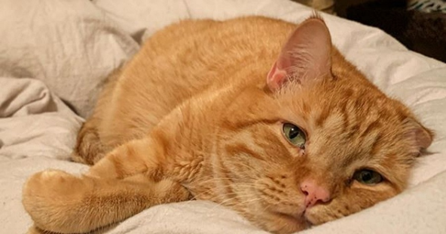 benben gato mas triste mundo