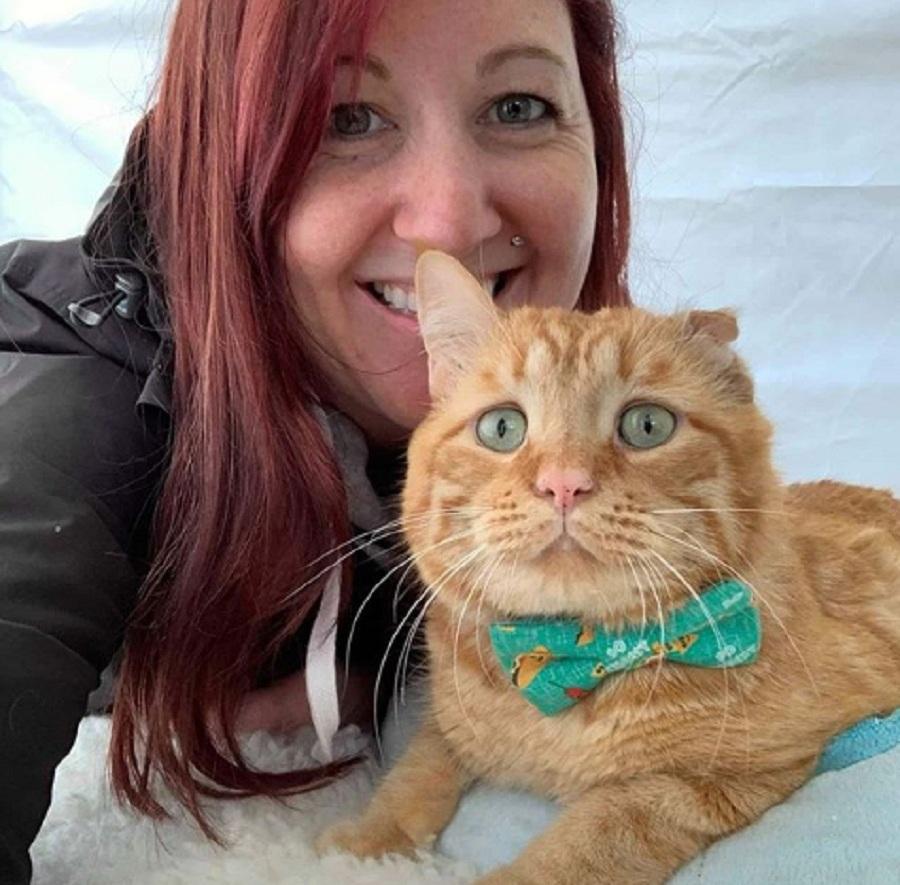 gato benben adoptado