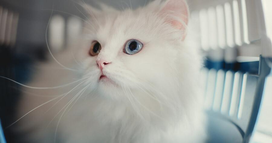gato blanco transportin
