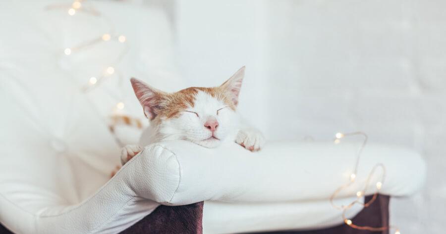 gato durmiendo sofa