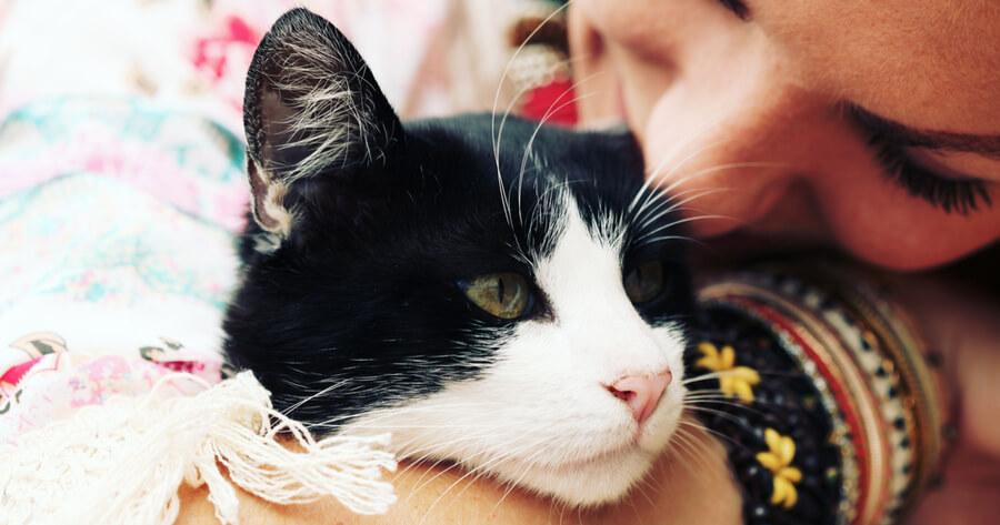 gato y humano abrazo
