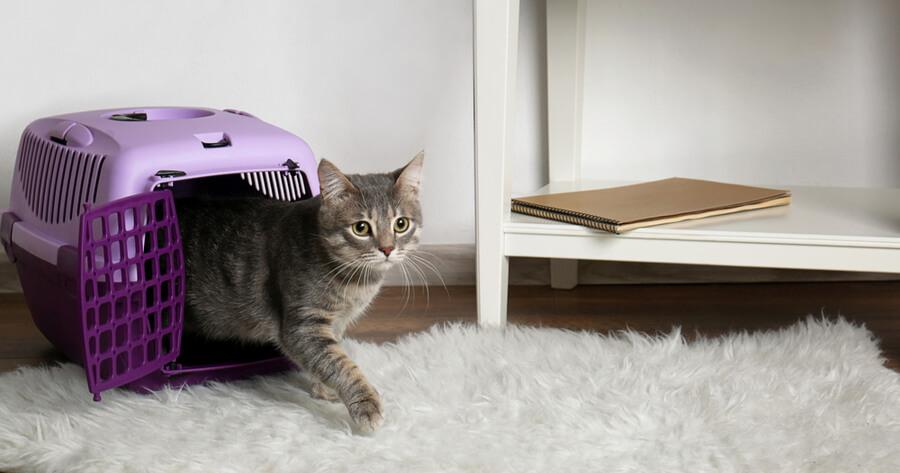 gato transportin salon