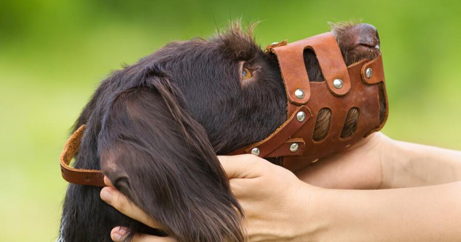 humano colocando bozal perro