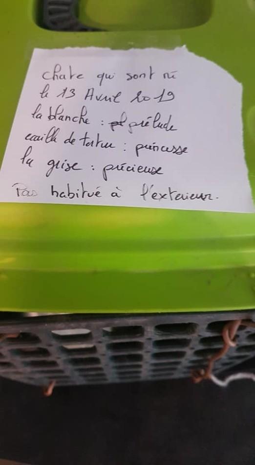 nota gatos abandonados francia