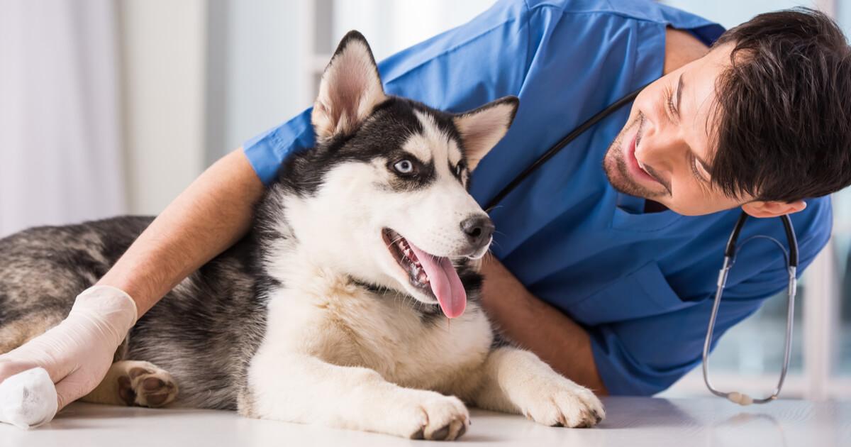 perra menopausia veterinario
