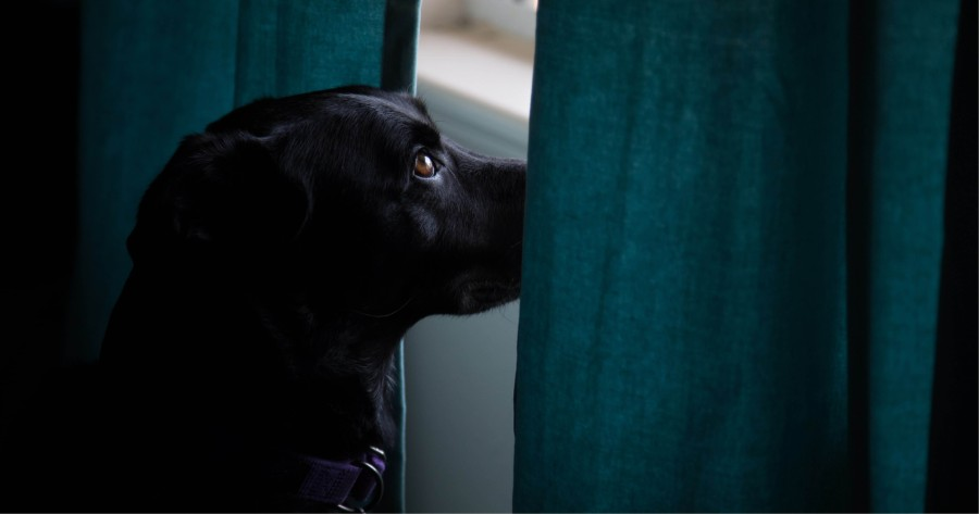 separacion perro desconfinamiento