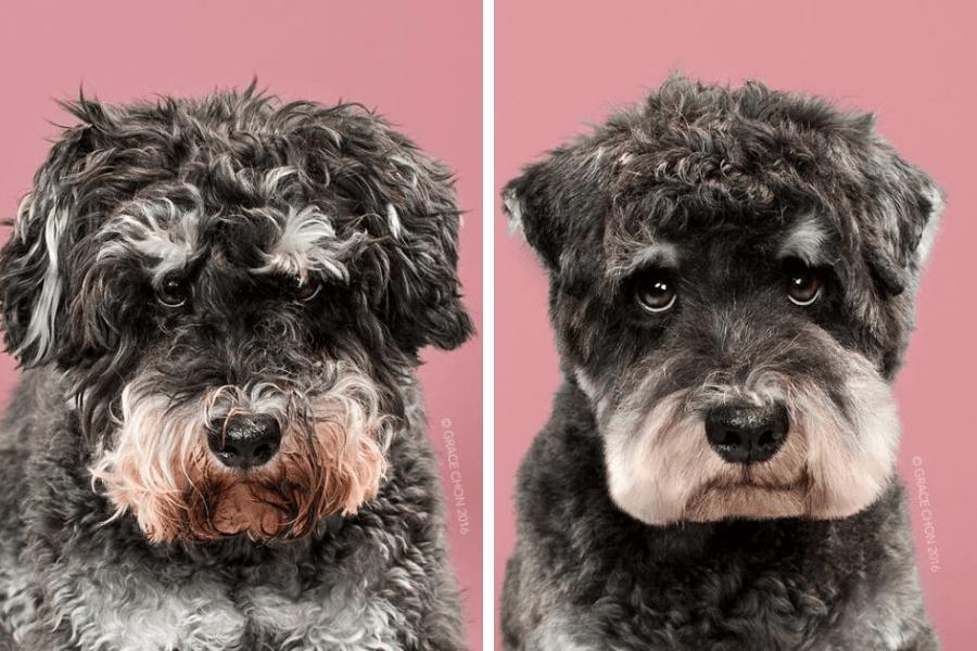perro triste antes y despues peluqueria