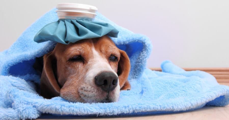 tratamiento epilepsia en perros
