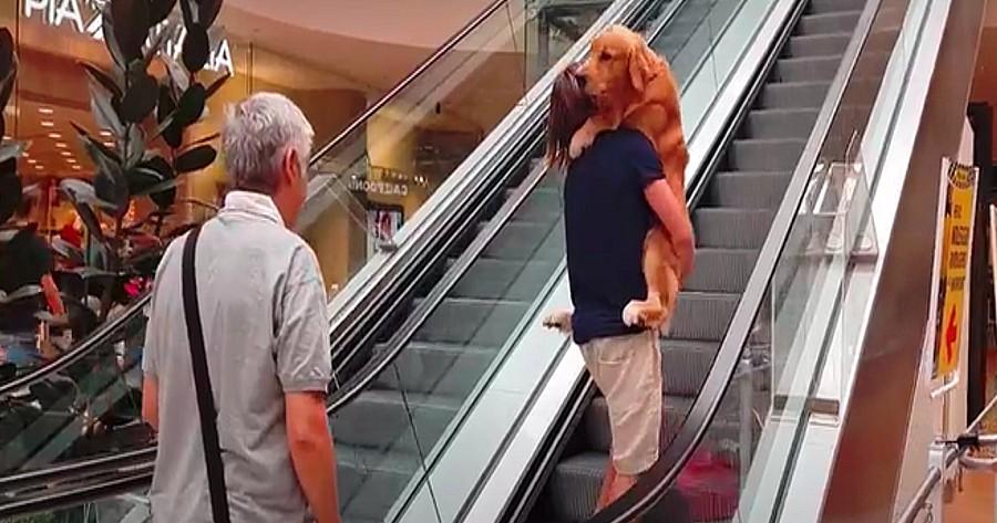 perro golden retriever escalera mecanica