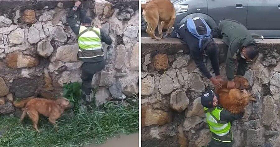 rescate perro caido acequia