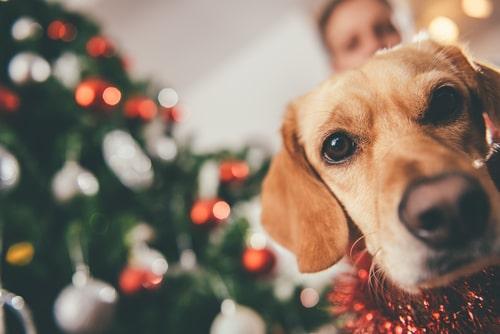 Navidad perros arbol