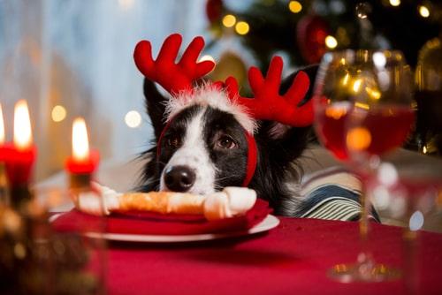 Navidad perros comiendo
